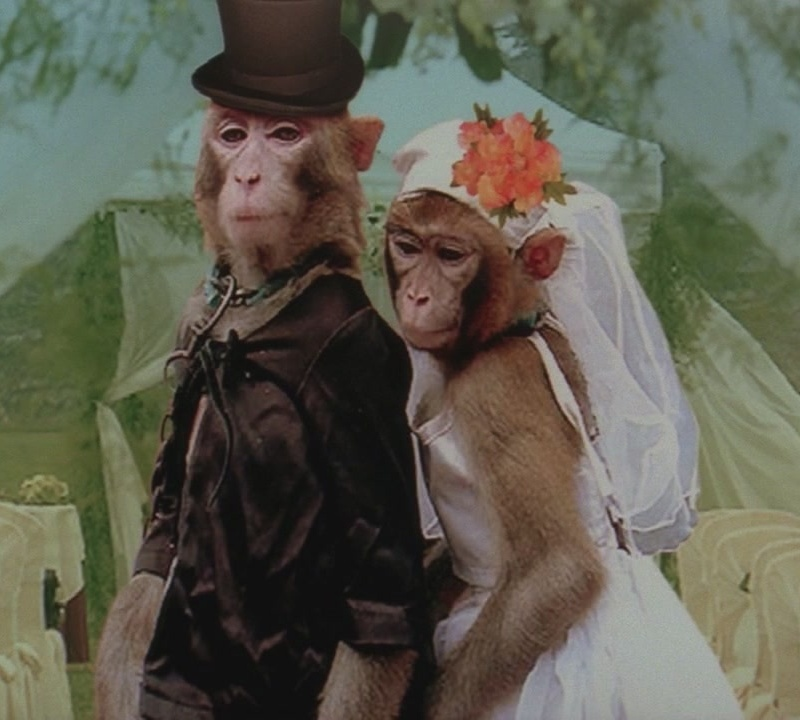 monkey wedding Archives - Funny Pictures, Jokes, Cute & Love ...