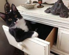 dresser-cat